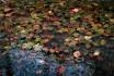 [006-365] Leaves on Ice